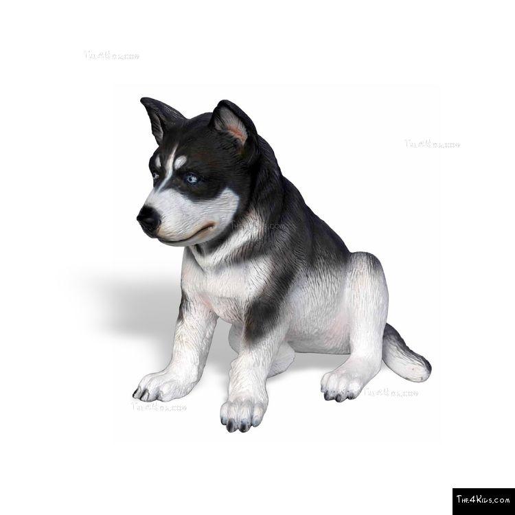 Image of Husky Pup