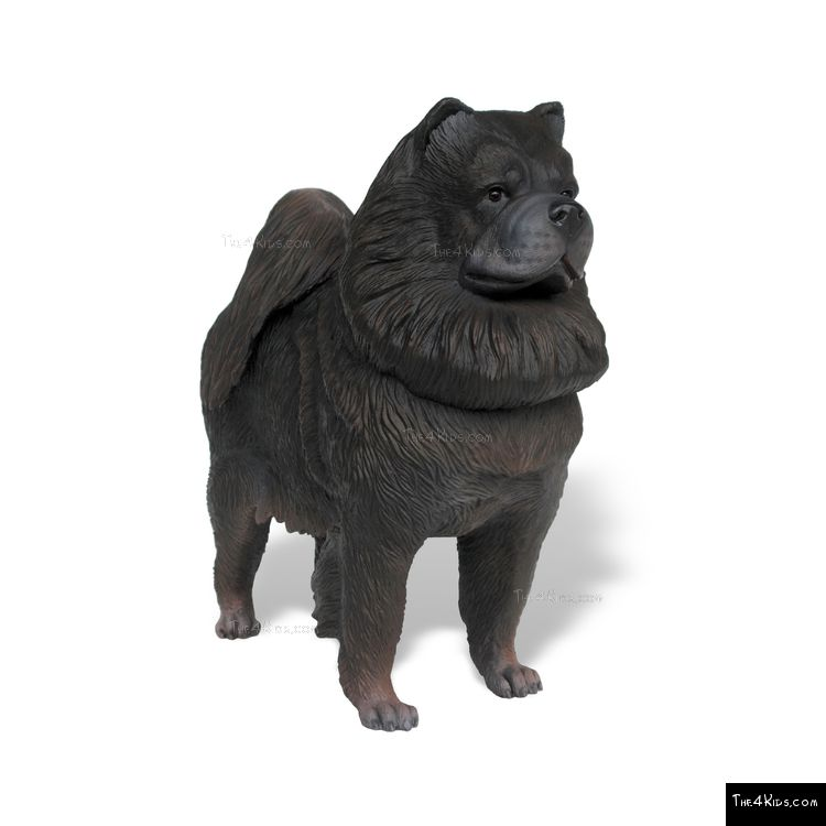 Image of Chow Chow
