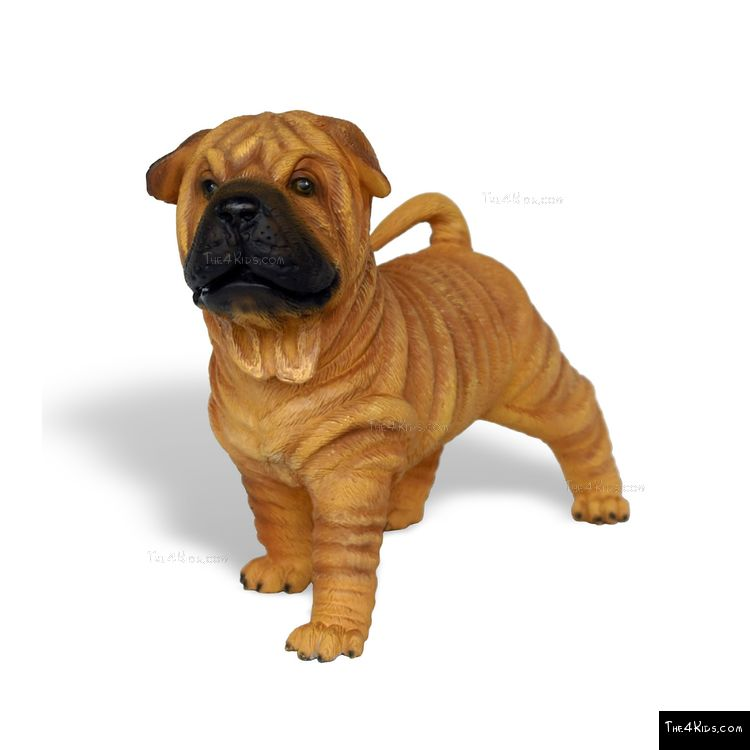 Image of Shar-Pei Pup