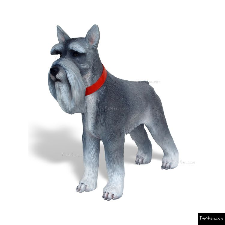 Image of Mini Schnauzer