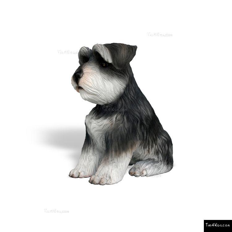 Image of Mini Schnauzer Pup