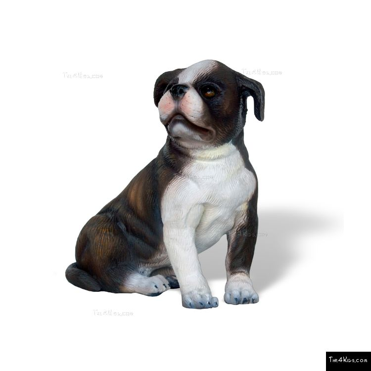 Image of Boston Terrier Pup