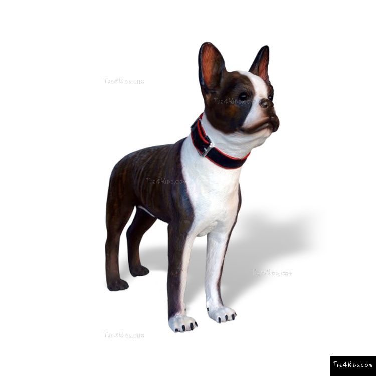 Image of Boston Terrier
