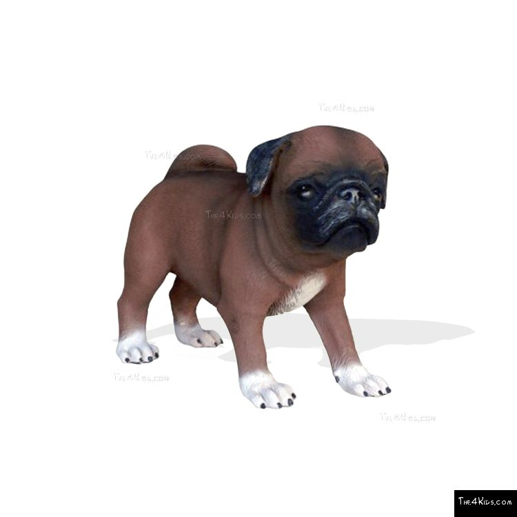 Image of Pug Pup