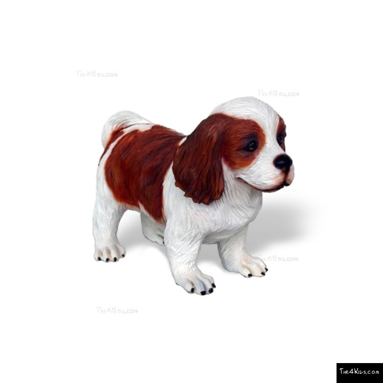 Image of Cavalier King Spaniel Pup
