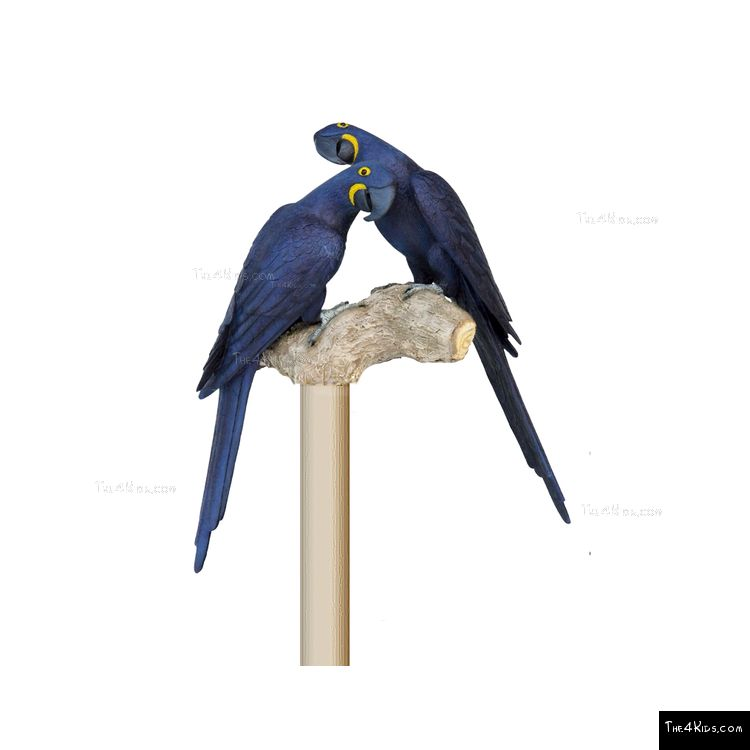 Image of Hyacinth Macaw Pair Post Topper