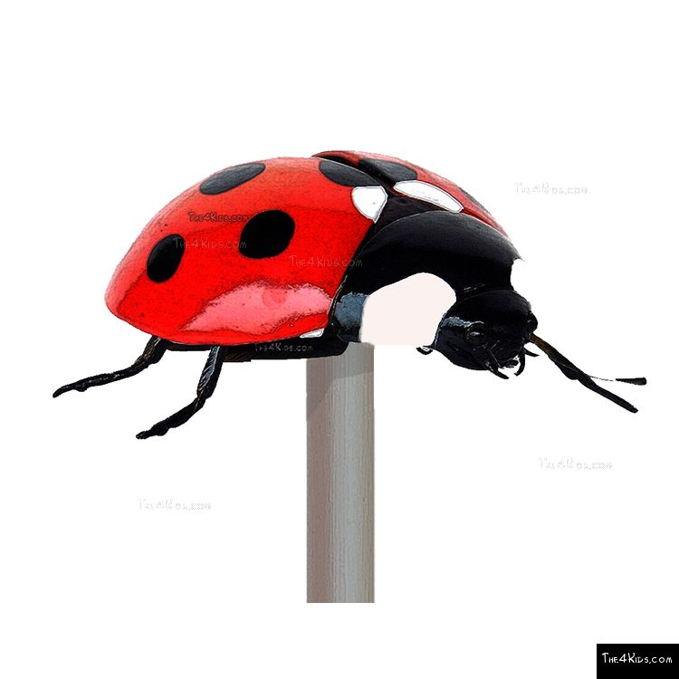 Image of Lady Bug Post Topper