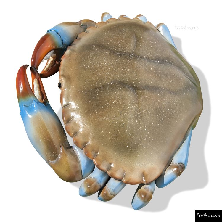 Image of 3 ft Blue Crab