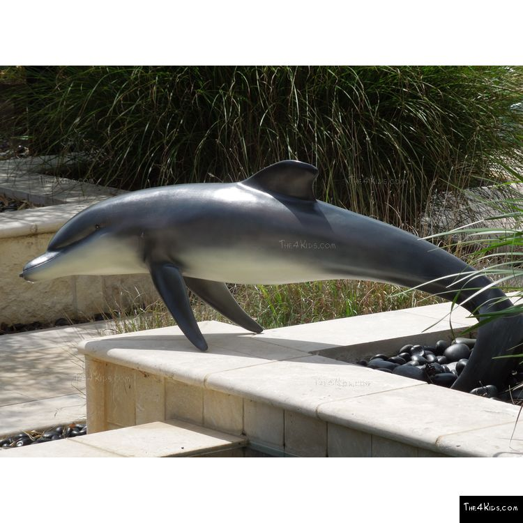 Image of Small Dolphin