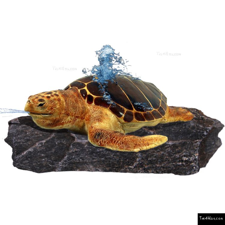 Image of Loggerhead Turtle