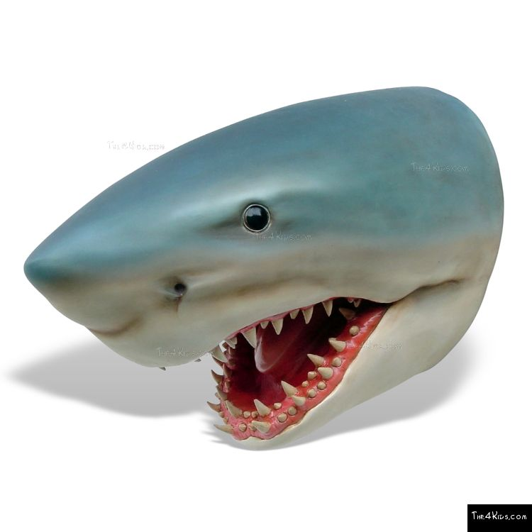 Image of Great White Shark Head