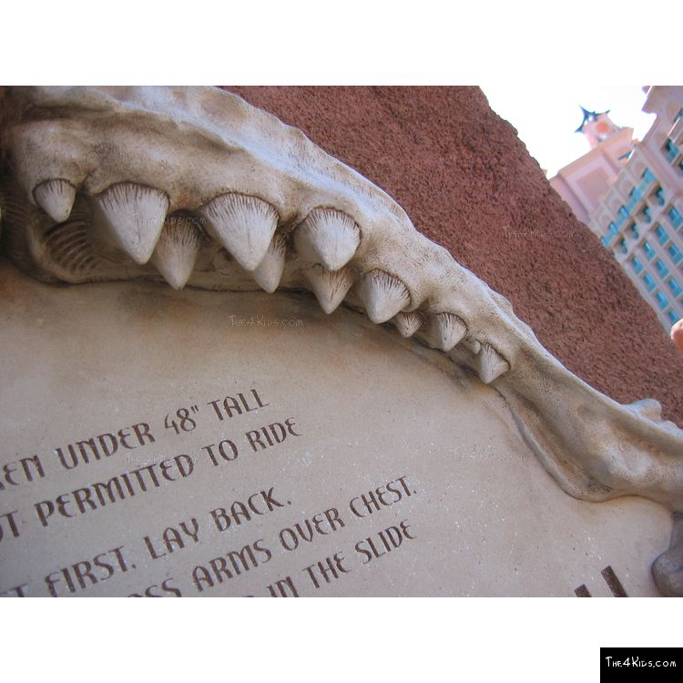 Image of Great White Shark Jaws Sculpture