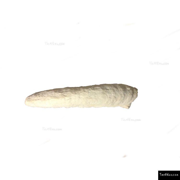Image of Ammonite Climber