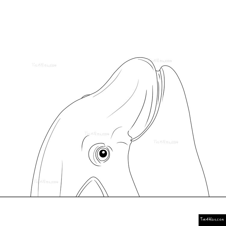 Image of Orca Climber