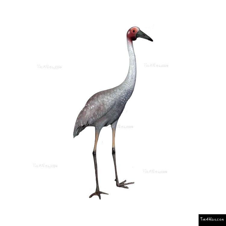 Image of Brolga Crane