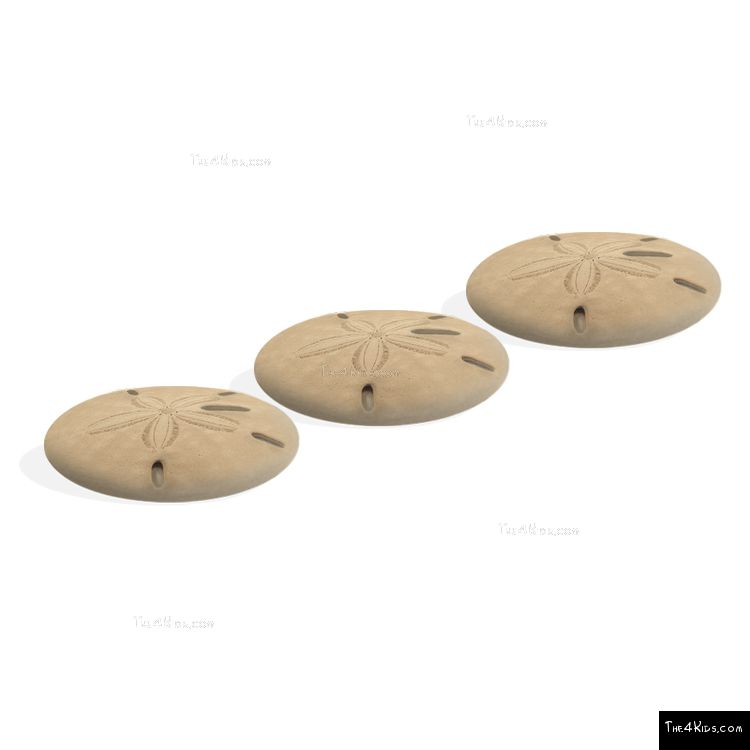 Image of Sand Dollar Steppers