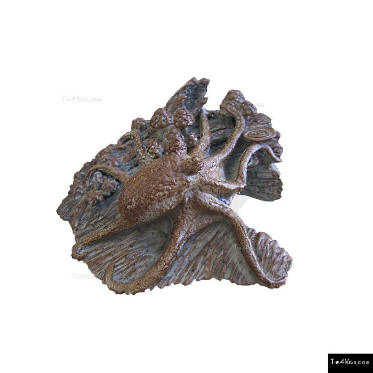 Image of Octopus Log Crawler