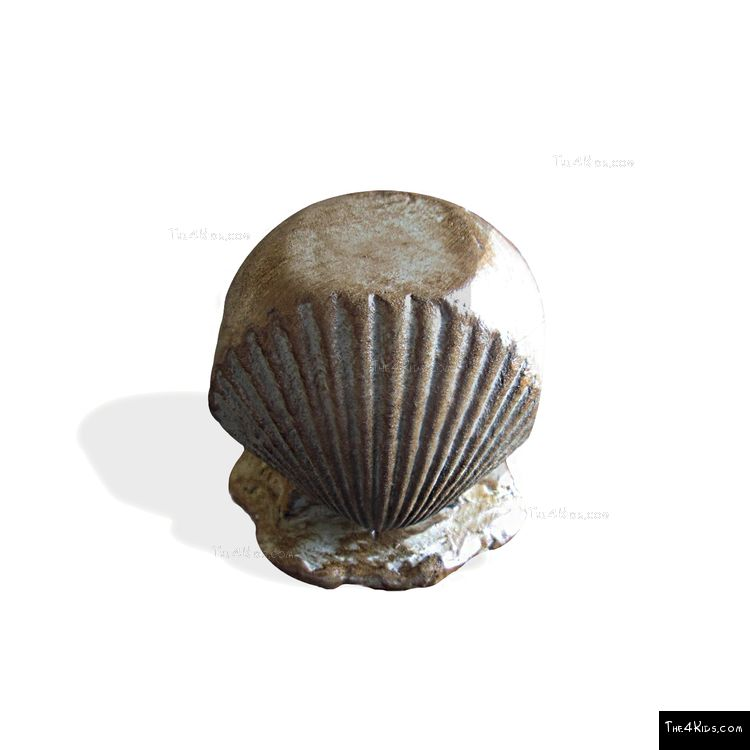 Image of Seashell Steppers