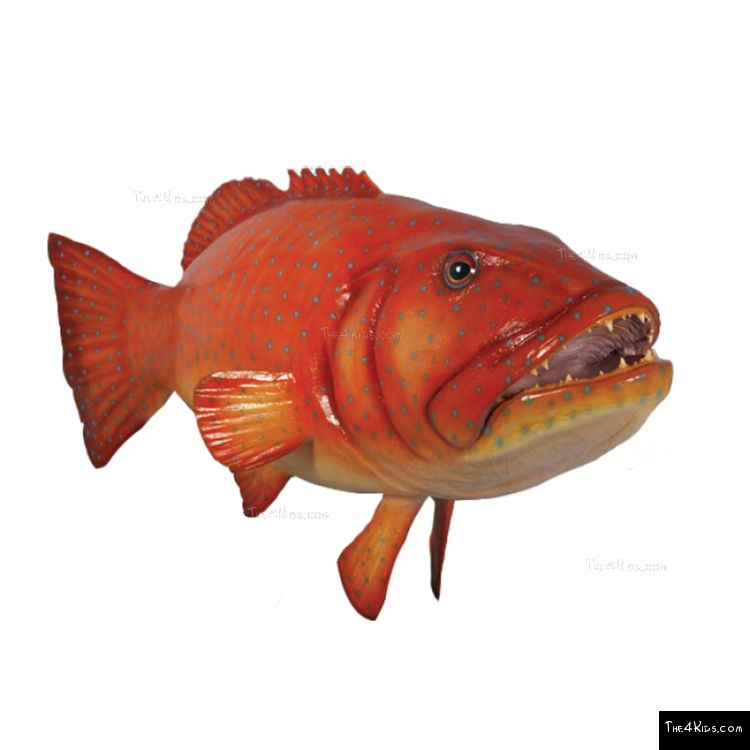 Image of Coral Trout