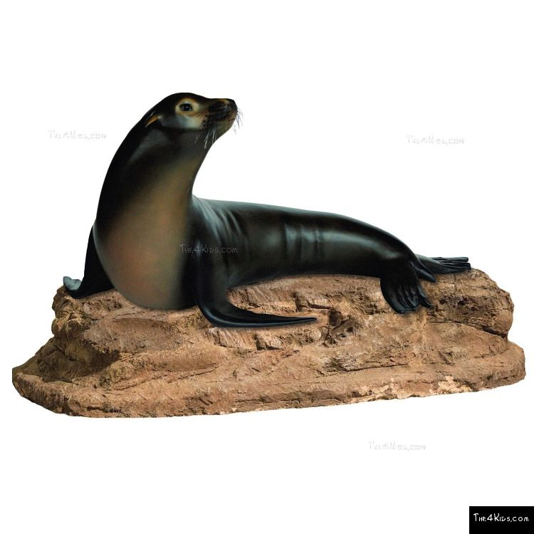 Image of Sea Lion Climber