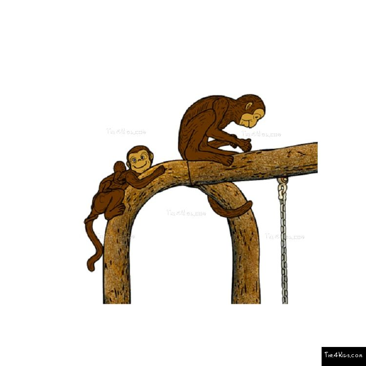 Image of Monkey Swing
