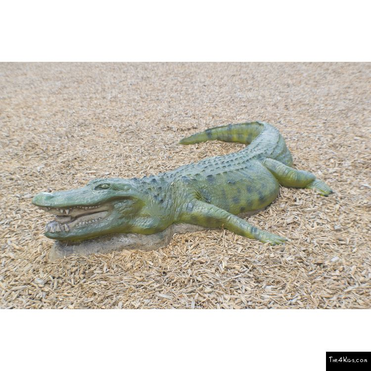 Image of 8ft American Alligator