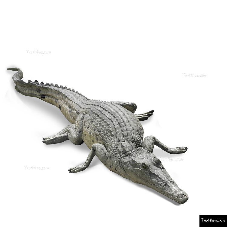 Image of 4ft Crocodile Play Sculpture