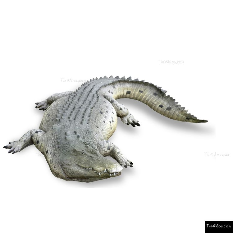 Image of 12ft Crocodile Play Sculpture