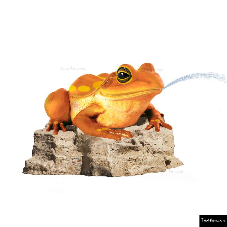Image of Colorful Frog on Rock