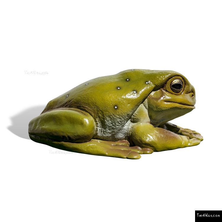 Image of Frog Play Sculpture