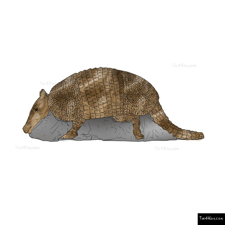 Image of Armadillo Climber