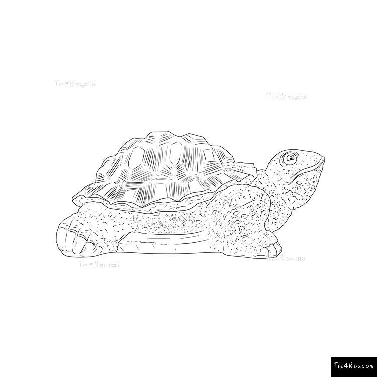 Image of Tortoise Climber