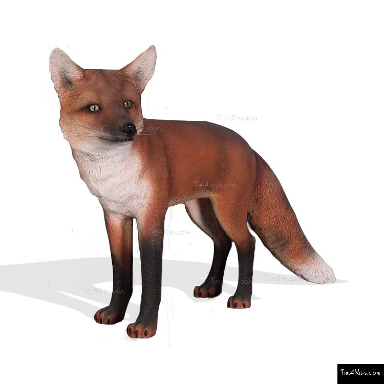 Image of Red Fox 1