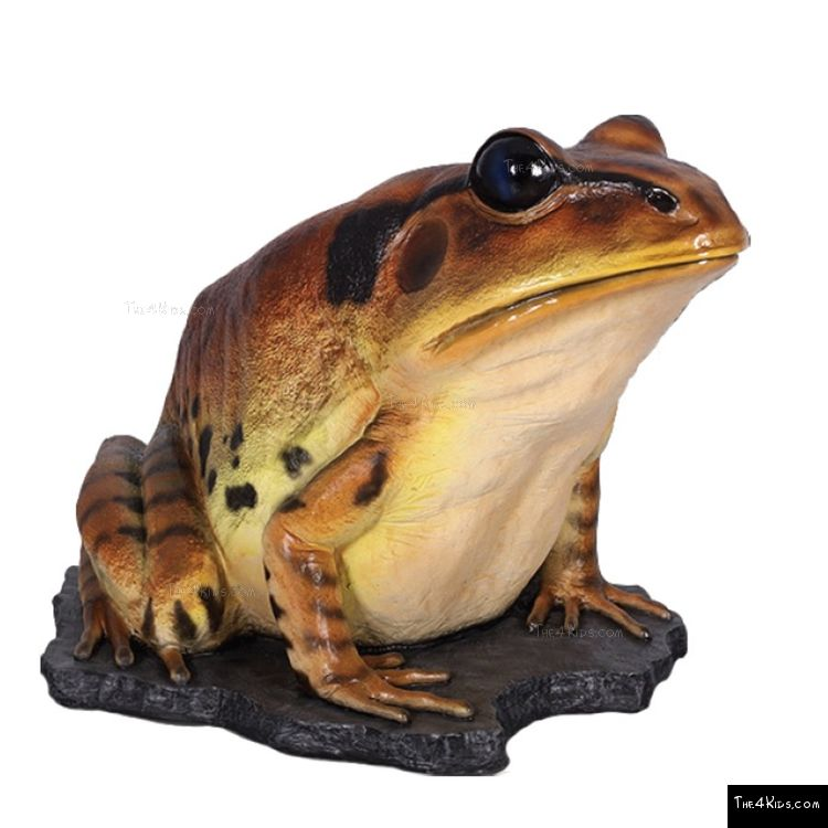 Image of Great Barred Frog