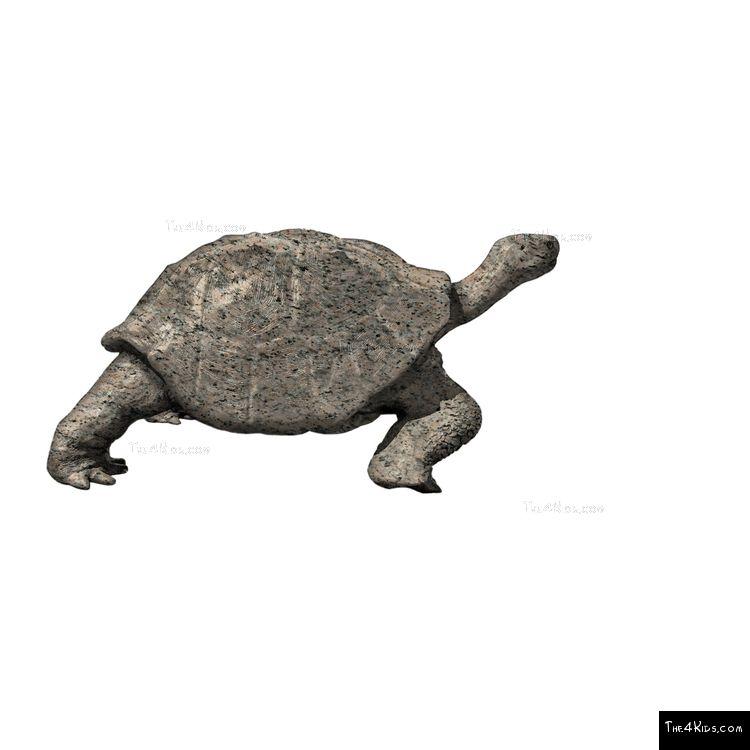 Image of Stone Tortoise Sculpture