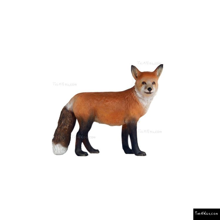 Image of Red Fox 2