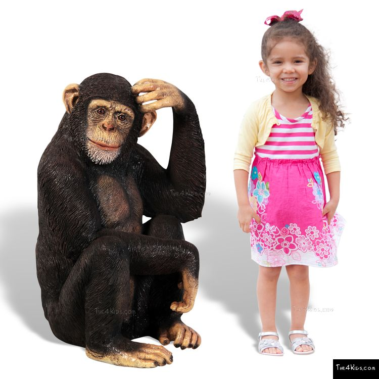 Image of Chimpanzee