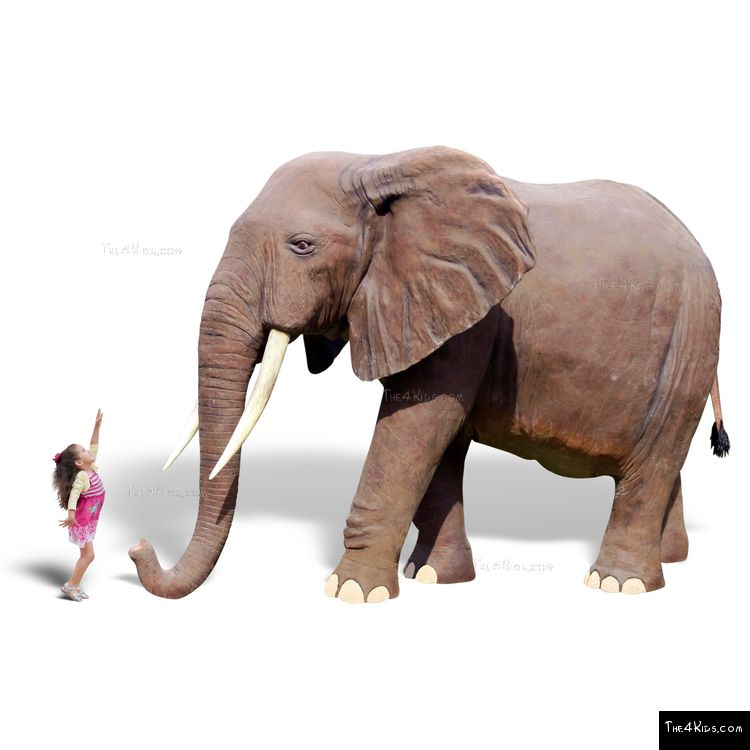 Image of 8ft African Elephant