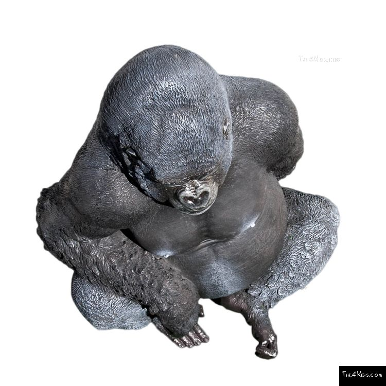 Image of Silver Back Gorilla