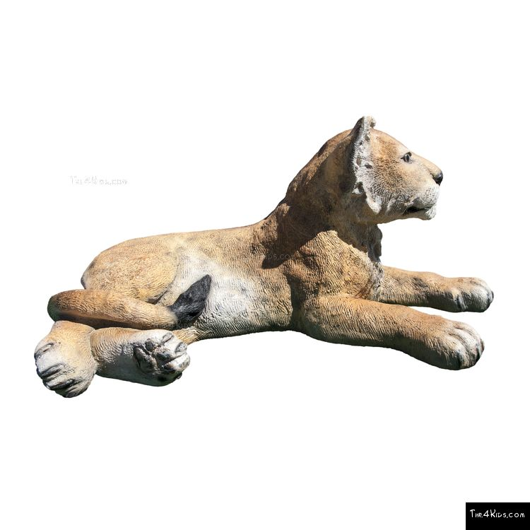 Image of Lying Lion Cub