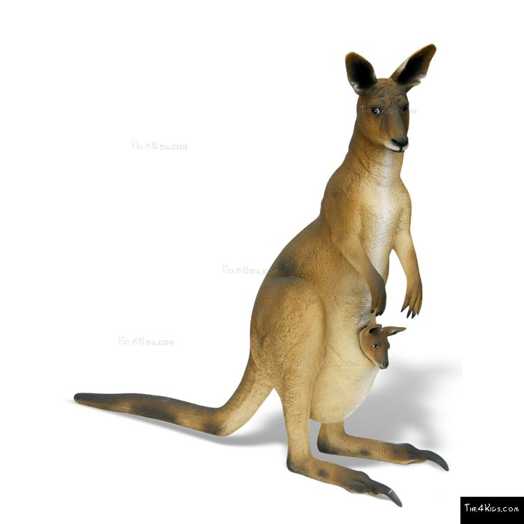 Image of 5ft Kangaroo with Joey