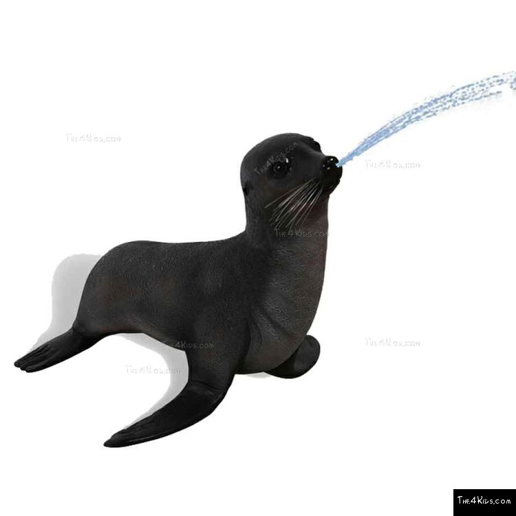 Image of Baby Fur Seal