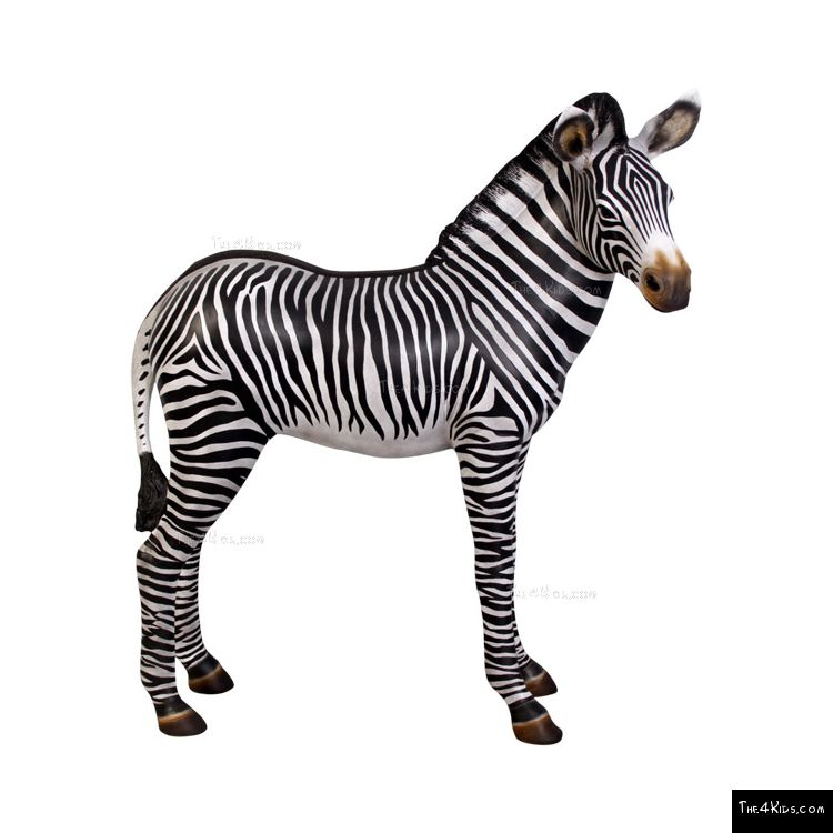 Image of Zebra Foal