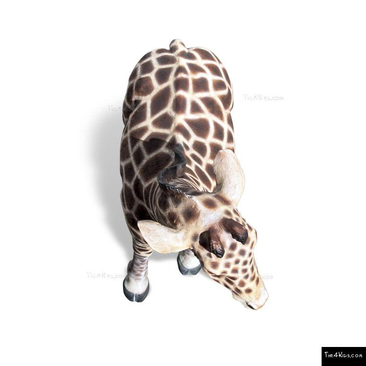 Image of 6ft Baby Giraffe