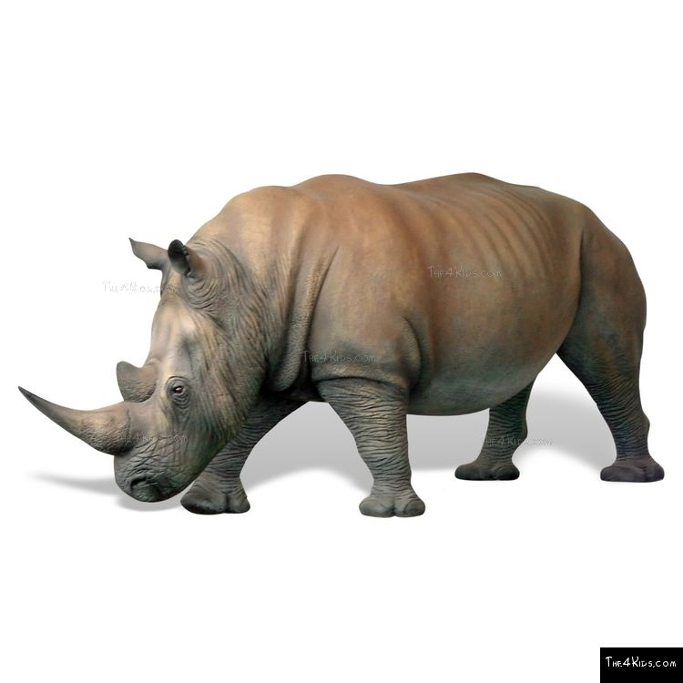 Image of Rhinoceros