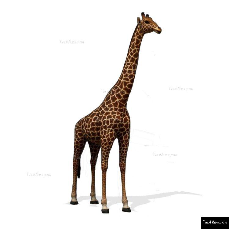Image of 17ft Giraffe