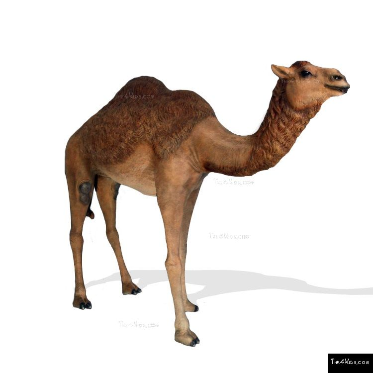 Image of Dromedary Camel Sculpture