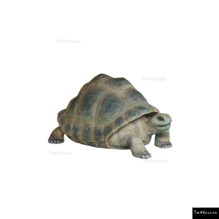 Image of Aldabra Tortoise