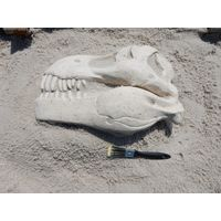 Thumbnail for T-Rex Skull Fossil