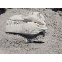 Thumbnail of T-Rex Skull Fossil